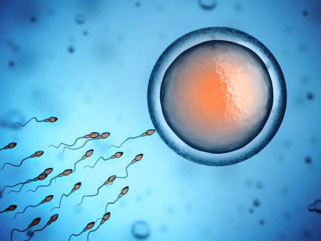 Ovocitele sunt puse in contact cu un numar mare de spermatozoizi